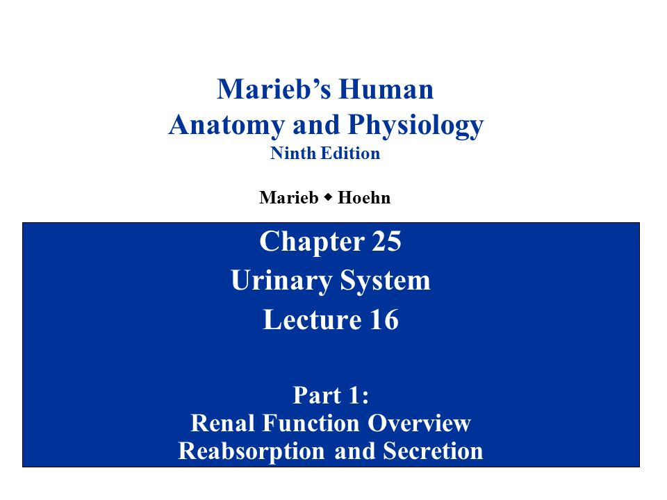 Chapter 7 8 marieb human anatomy and physiology Custom paper ...