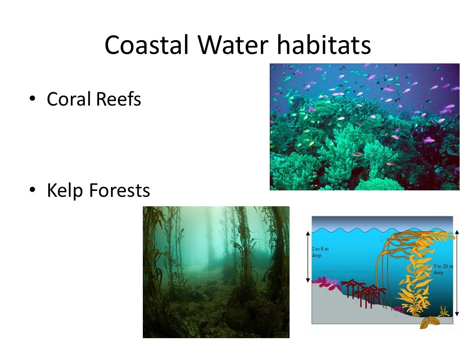 Coastal Water habitats Coral Reefs Kelp Forests