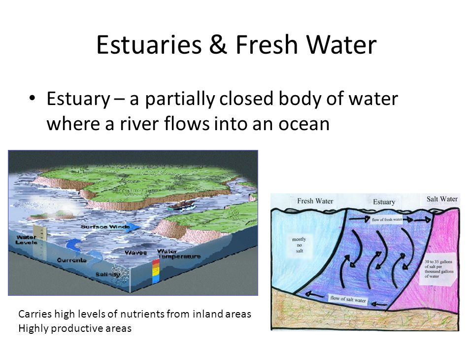 Estuaries & Fresh Water Estuary – a partially closed body of water where a river flows into an ocean Carries high levels of nutrients from inland areas Highly productive areas