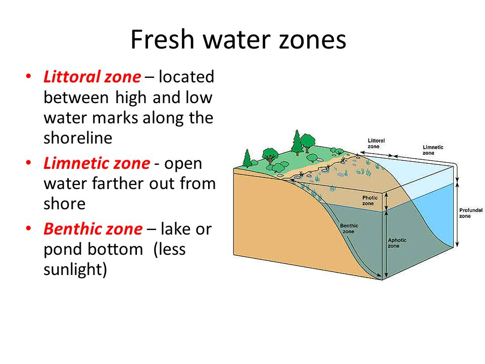 Fresh water zones Littoral zone – located between high and low water marks along the shoreline Limnetic zone - open water farther out from shore Benthic zone – lake or pond bottom (less sunlight)