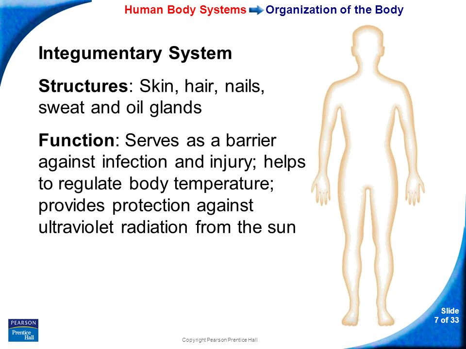 brief human body system run through Topic 14 how do systems work together in the human body gases and nutrients through the body t he respiratory system carries oxygen to and removes carbon dioxide.