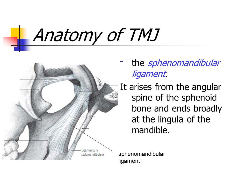 biology of the human dentition temporomandibular joint -tmj. - ppt, Human Body