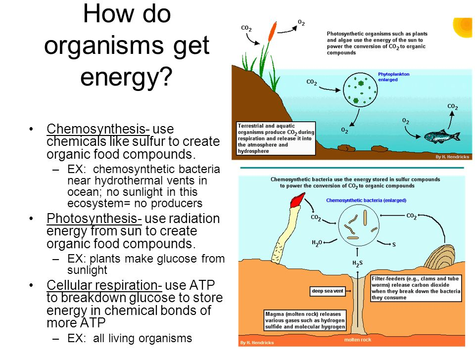 Bacteria Chemosynthesis Diagram - Wiring Diagram •