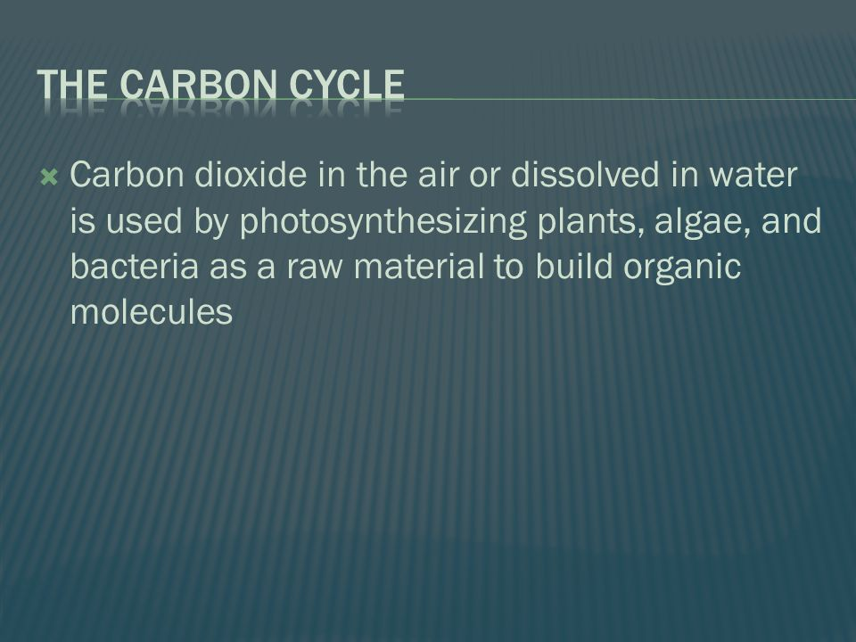  Carbon dioxide in the air or dissolved in water is used by photosynthesizing plants, algae, and bacteria as a raw material to build organic molecules