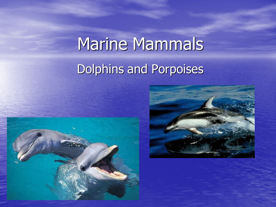 describing characteristics of the marine mammals dolphins