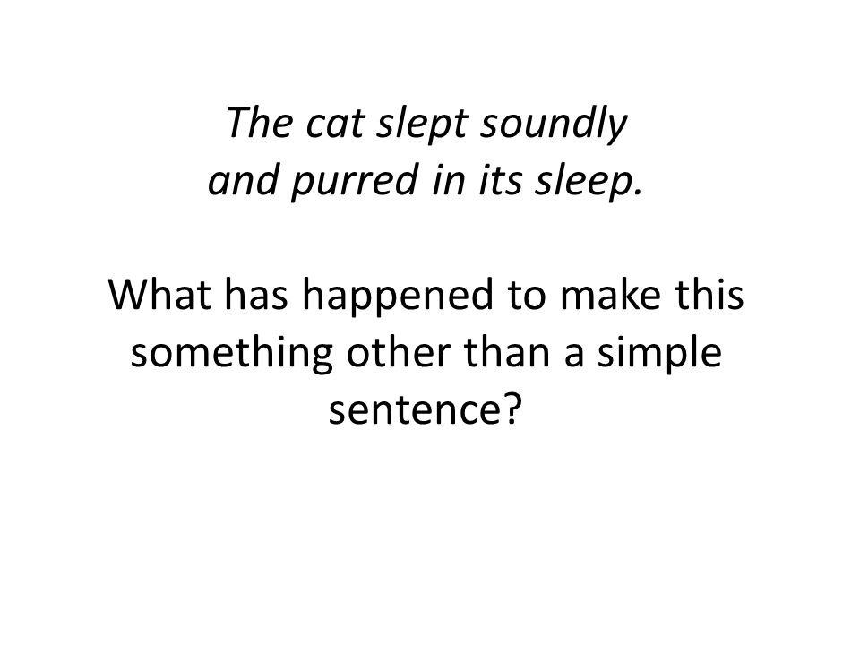 The cat slept soundly and purred in its sleep.