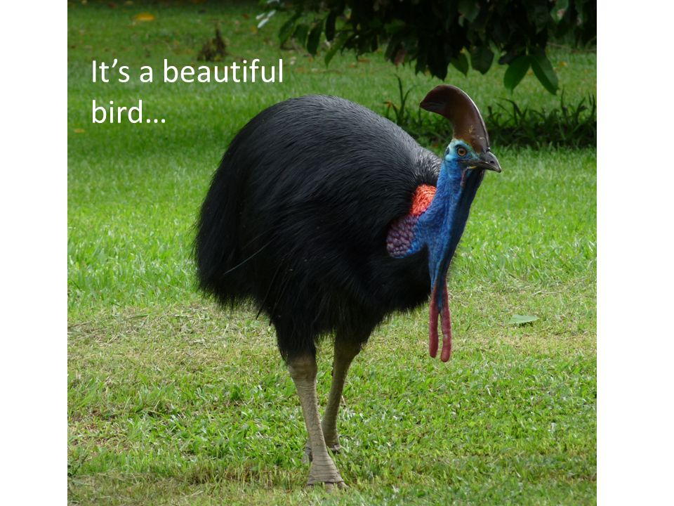 It's a beautiful bird…