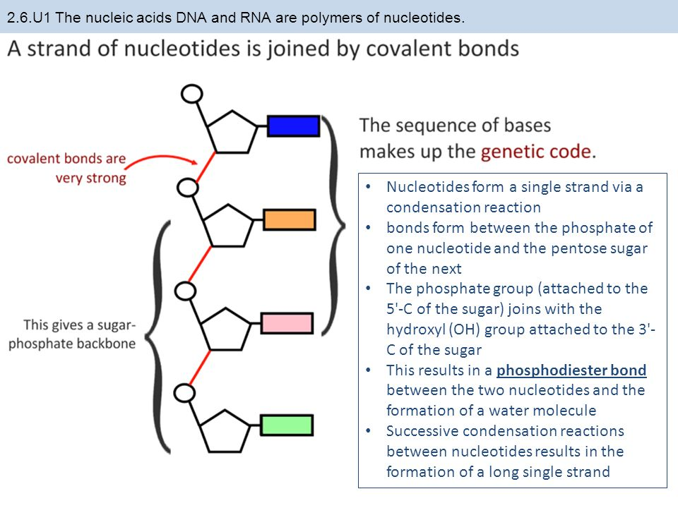 polymer reactions a dna paper very formal Dna: dna and its close dna is a very stable molecule  when an enzyme stops working, a metabolic block can occur, when a reaction in cell doesn't happen.