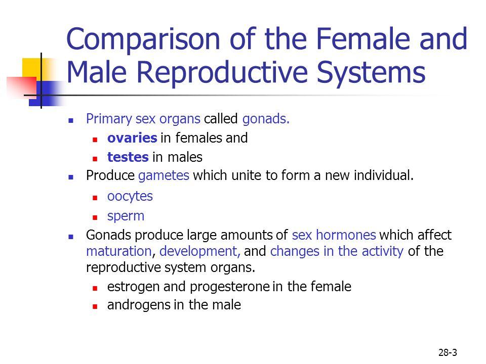 Comparing sex hormones men and women