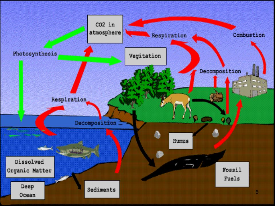 1 nutrient cycles water cycle carbon cycle nitrogen cycle phosphorus 6 6 why is carbon important all of the macromolecules contain carbon carbon is used to make sugars which provide living things with energy ccuart Choice Image