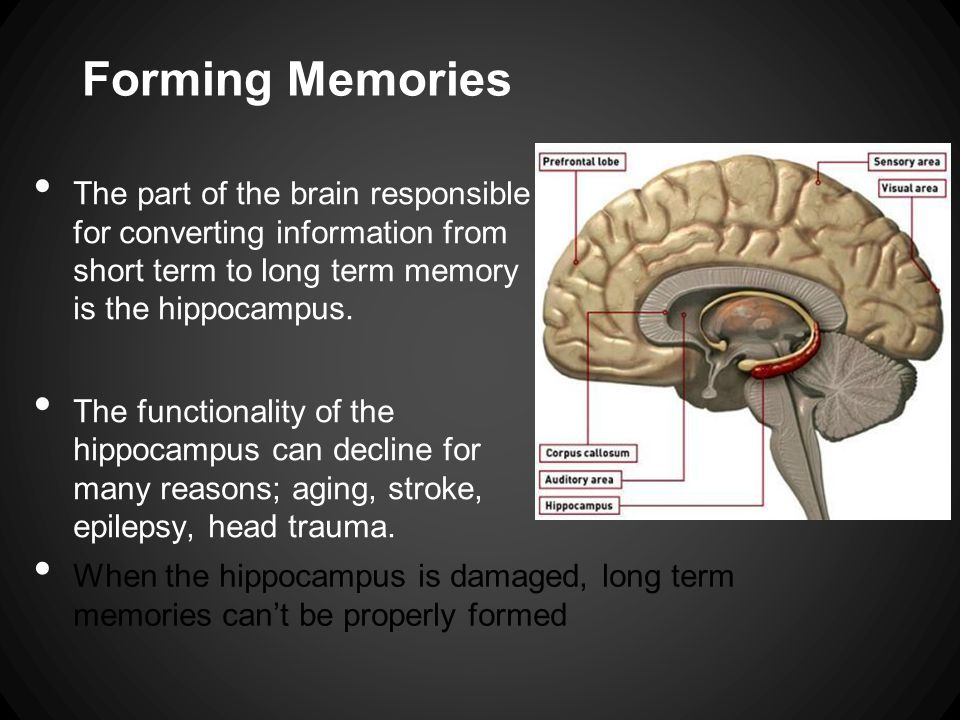 The remind program callie thomas 11142012 forming memories there forming memories the part of the brain responsible for converting information from short term to long ccuart Gallery
