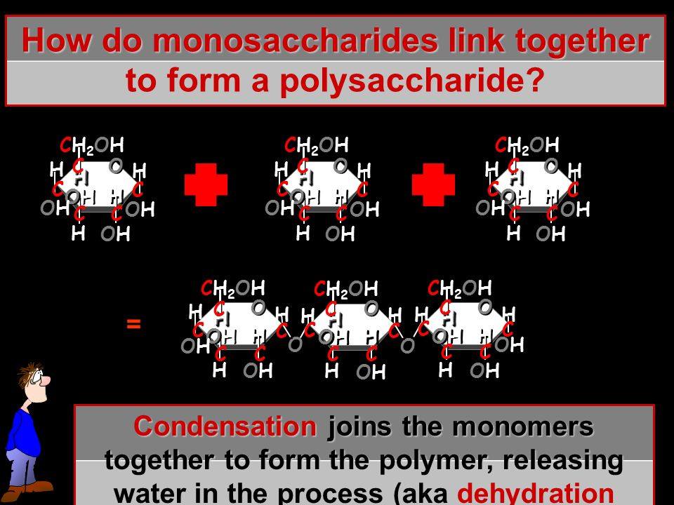 How do monosaccharides link together to form a polysaccharide.