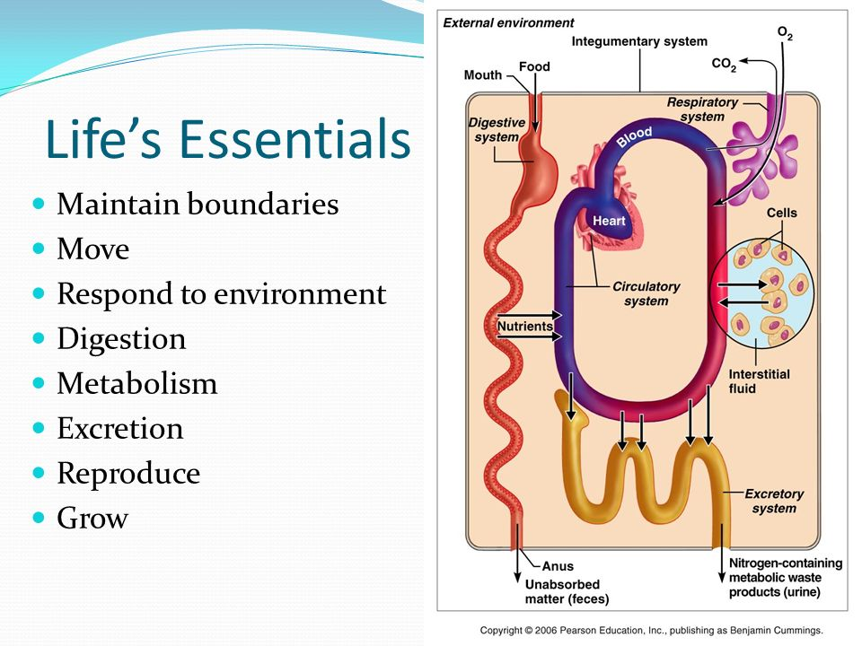 physiology notes cell structure and metabolism Information on mrs chou's classes i would recommend that you download and print out the lectures notes before each class and chapter 35 plant structure s13.