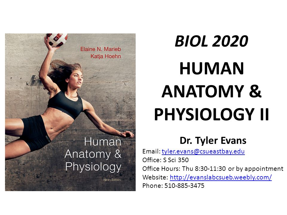 HUMAN ANATOMY & PHYSIOLOGY II BIOL 2020 Dr. Tyler Evans Office: S ...