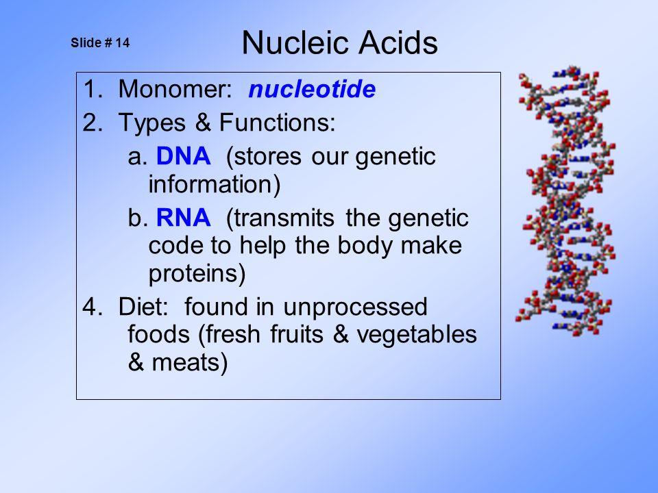1. Monomer: nucleotide 2. Types & Functions: a. DNA (stores our genetic information) b.