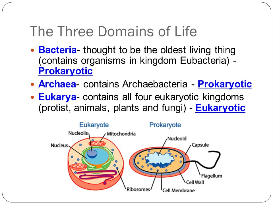 introduction to prokaryotes essay Introduction to the cell prokaryotes v eukaryotes organisms whose cells normally contain a nucleus are called eukaryotes those (generally smaller).