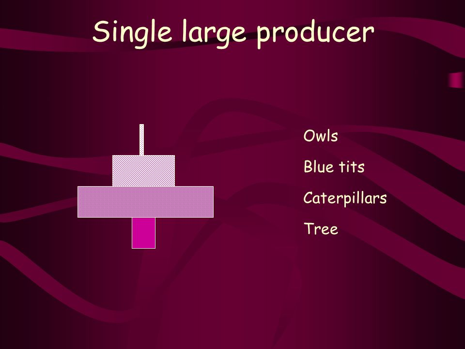 Single large producer Tree Caterpillars Blue tits Owls