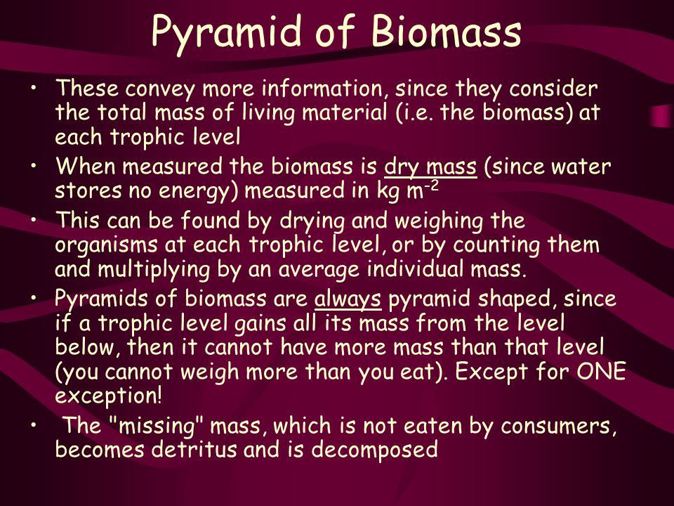 Pyramid of Biomass These convey more information, since they consider the total mass of living material (i.e.