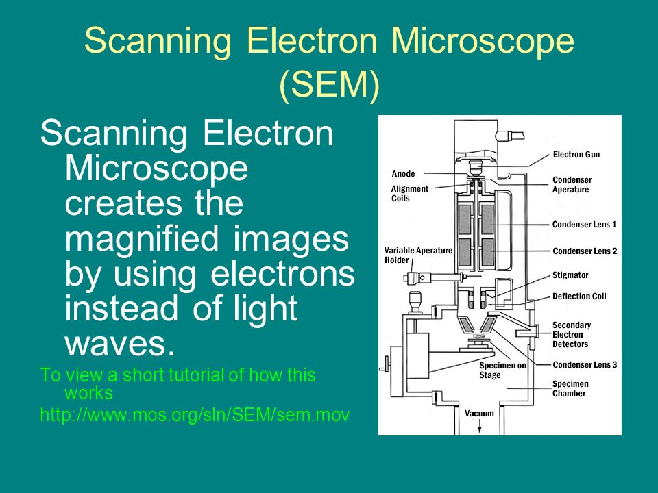 Microscopes are tools used to enlarge images of small objects so scanning electron microscope sem scanning electron microscope creates the magnified images by using electrons ccuart Images