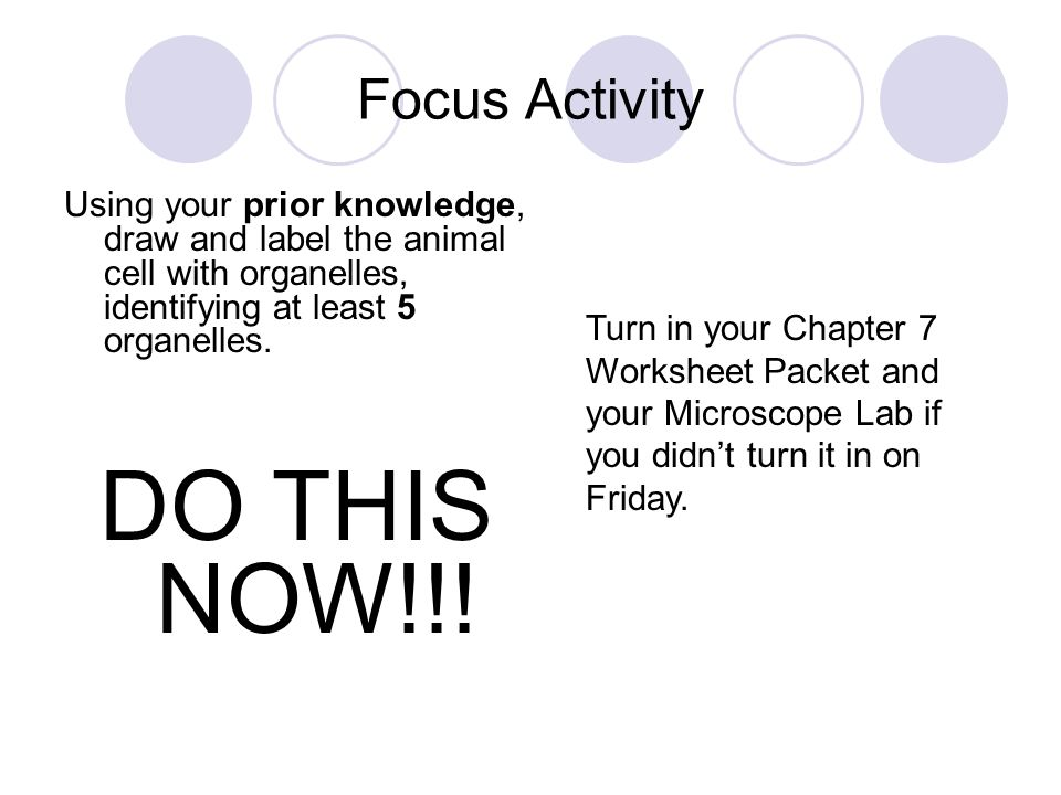 Focus Activity Using your prior knowledge, draw and label the ...