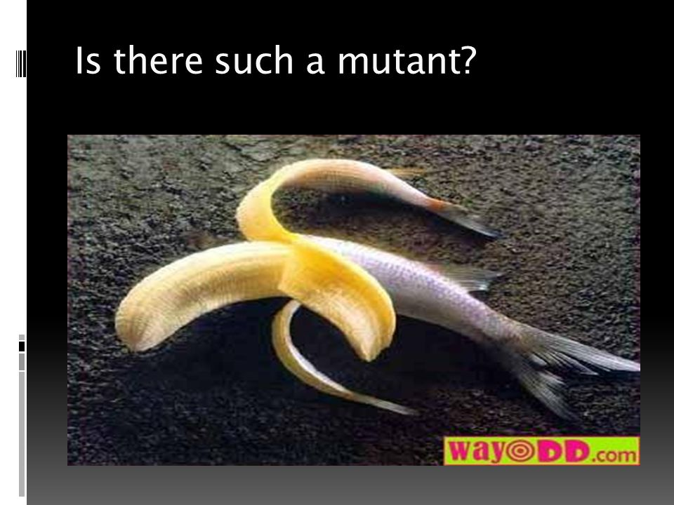 Is there such a mutant