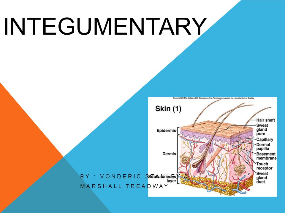 INTEGUMENTARY BY : VONDERIC STANLEY & MARSHALL TREADWAY