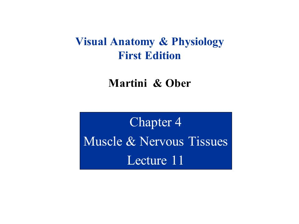 Visual Anatomy & Physiology First Edition Martini & Ober Chapter 4 ...