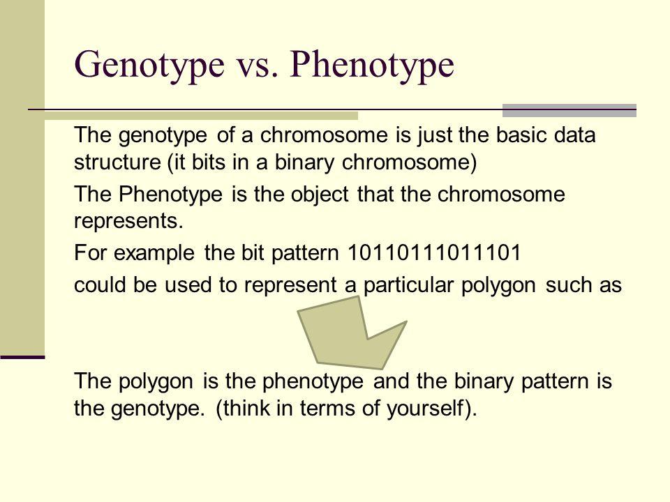 Crossovers And Mutation Richard P Simpson Genotype Vs Phenotype