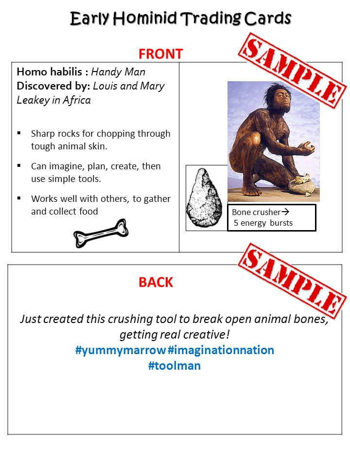 Early Hominid Trading Cards Task Create A Full Set Of Hominid