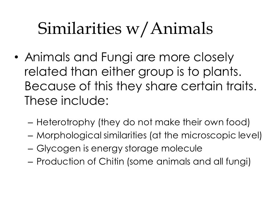similarities and differences of the animal While animals may be able to do things humans can do, and even share some of our dna, the differences between the most complex animal and the average human are enormous comparing a human to an animal is like comparing a car to a bicycle.