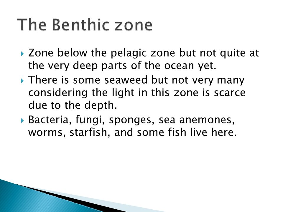  Here is the deepest part of the ocean and since not lots of light can reach here its about 3 degrees Celsius.