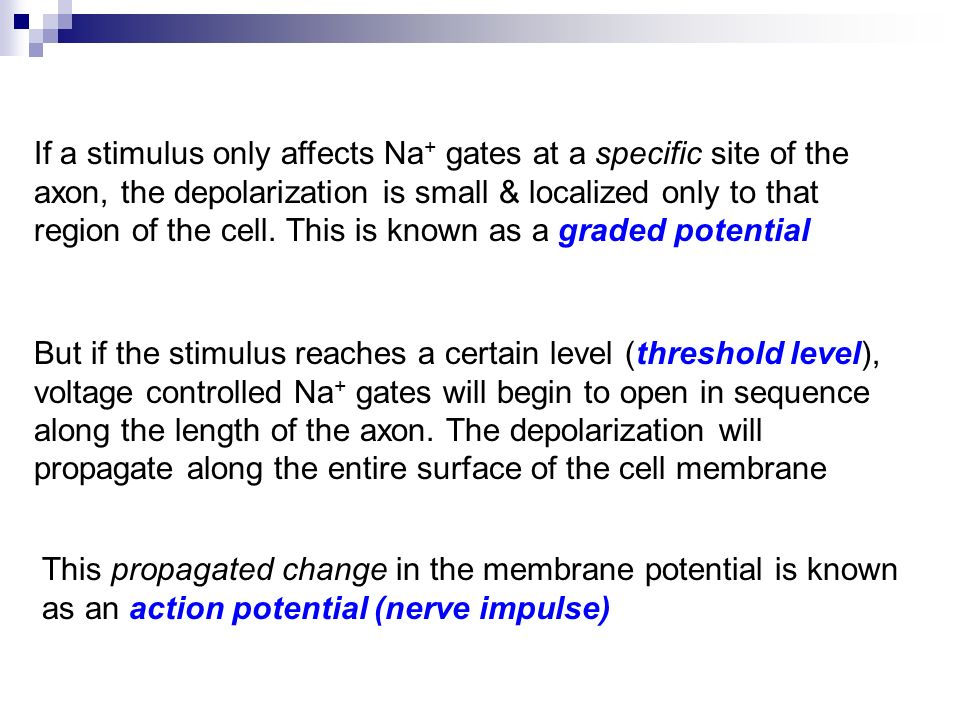 If a stimulus only affects Na + gates at a specific site of the axon, the depolarization is small & localized only to that region of the cell.
