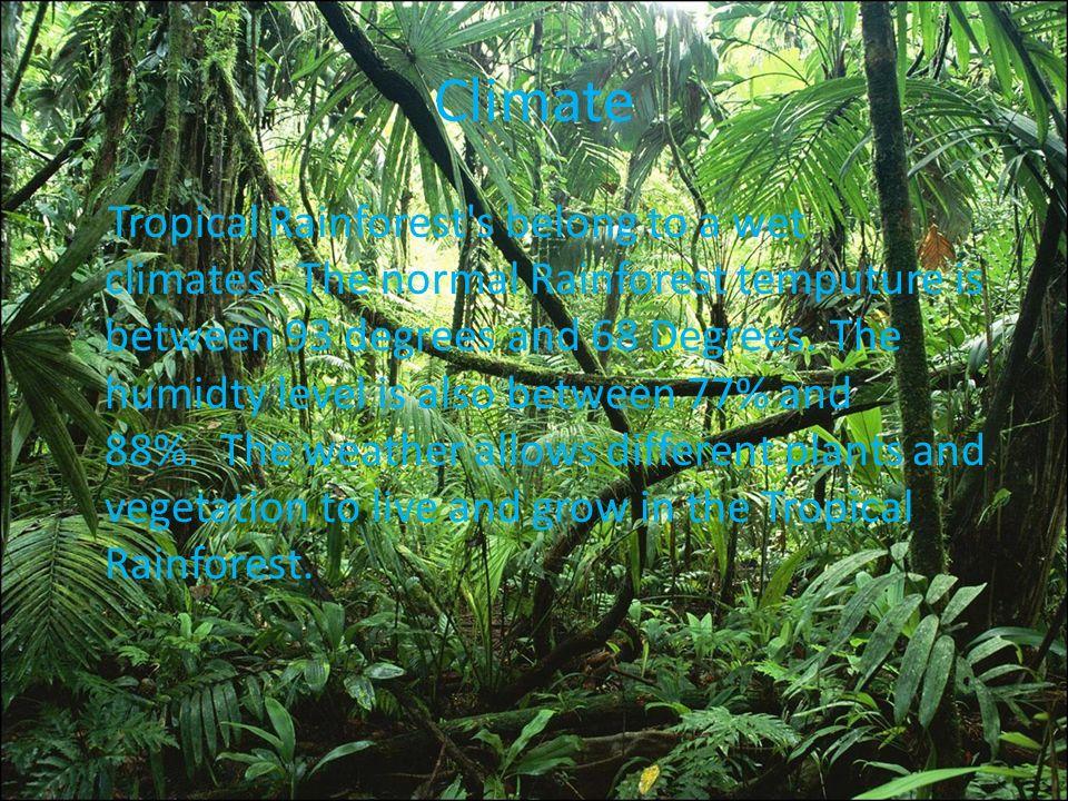 Rainforest Biomes  Blue Planet Biomes