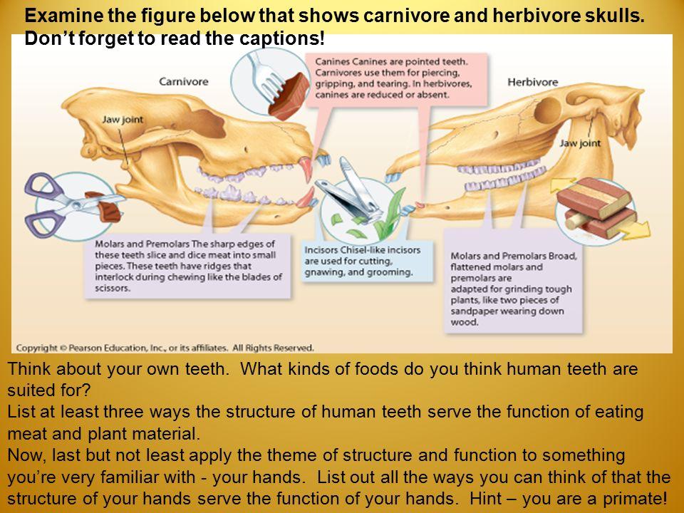 1 Introduction to Biology: Basic Biological Principles. - ppt download