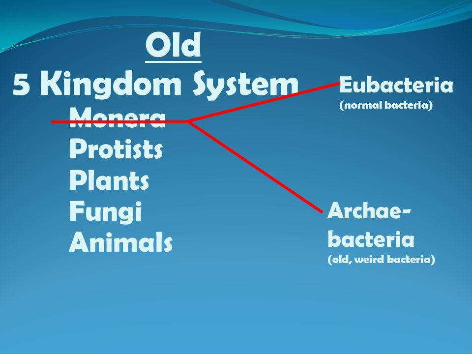 Old 5 Kingdom System Monera Protists Plants Fungi Animals