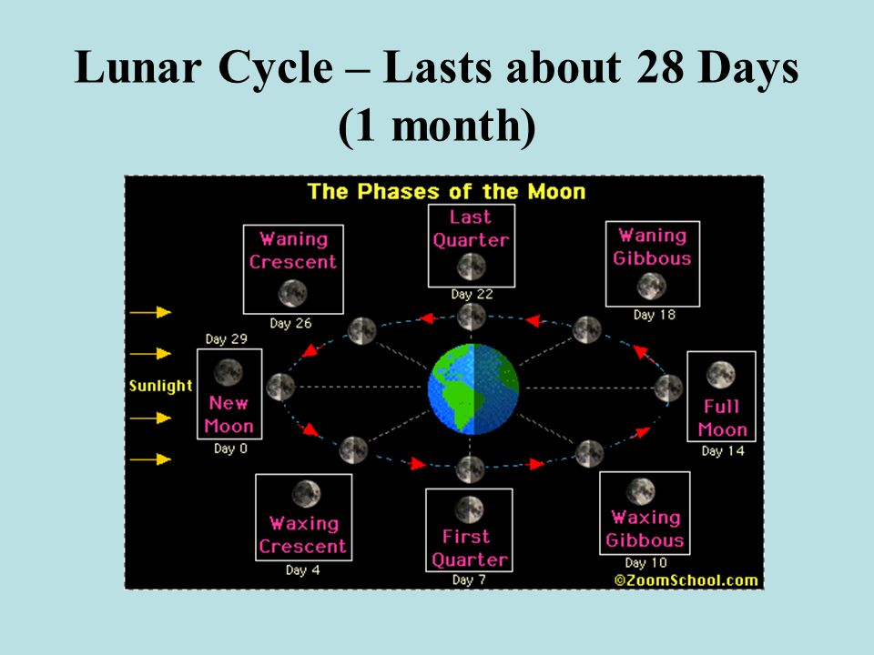 Lunar Cycle – Lasts about 28 Days (1 month)