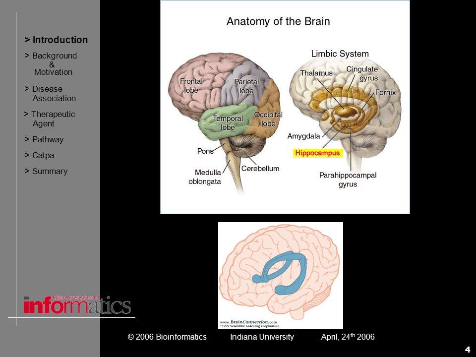 Ausgezeichnet Cerebellum Anatomie Und Physiologie Bilder ...