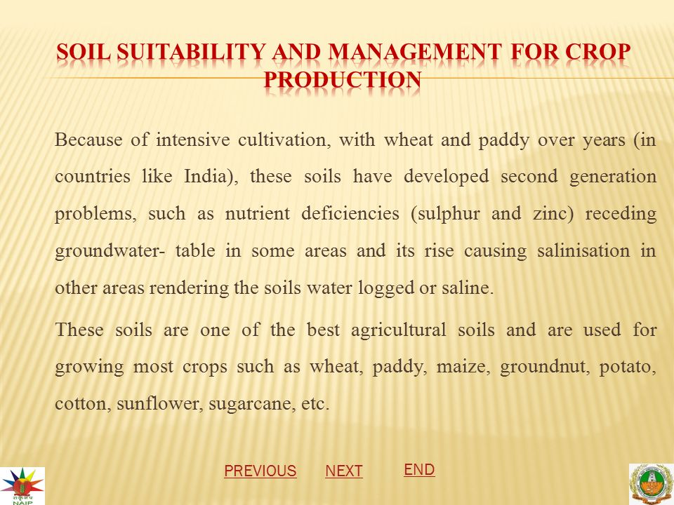 Because of intensive cultivation, with wheat and paddy over years (in countries like India), these soils have developed second generation problems, such as nutrient deficiencies (sulphur and zinc) receding groundwater- table in some areas and its rise causing salinisation in other areas rendering the soils water logged or saline.