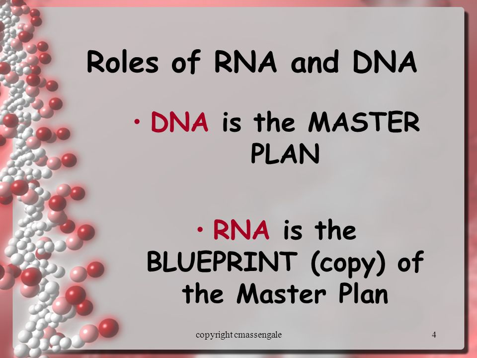 1 protein synthesis copyright cmassengale 2 protein synthesis dna 4 4 roles of rna and dna dna is the master plan rna is the blueprint copy of the master plan copyright cmassengale malvernweather Choice Image
