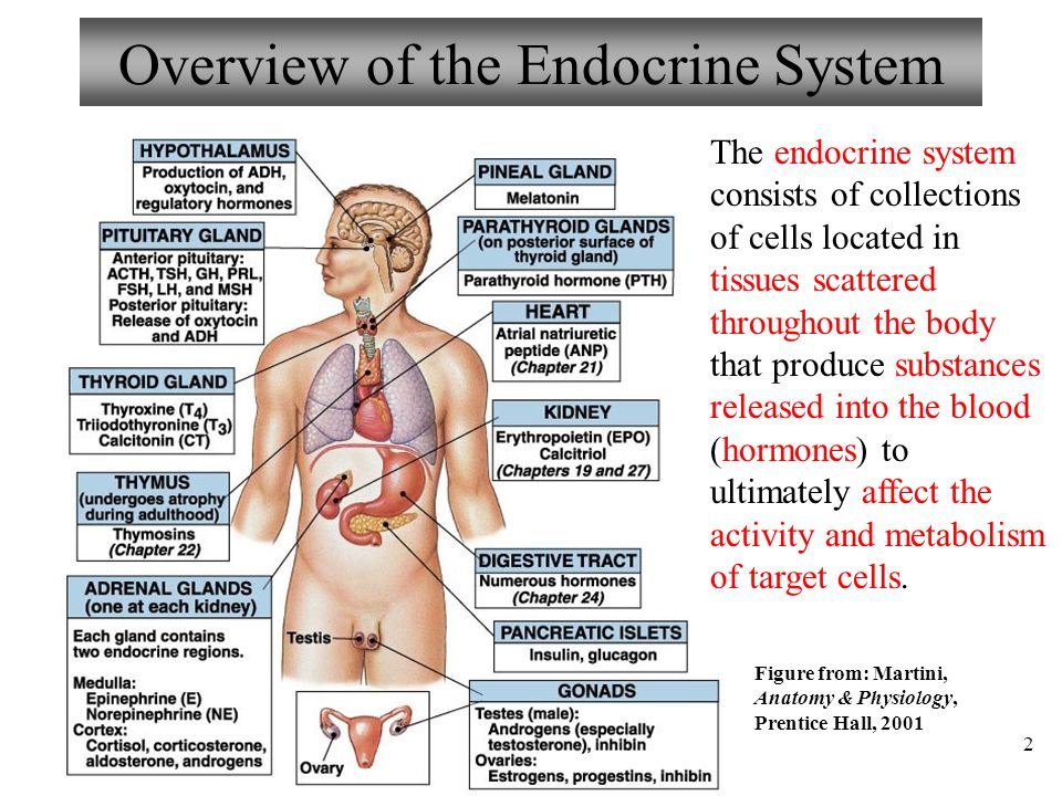 Chapter 16 Endocrine System Lecture 13 Part 1: Overview and Types of ...