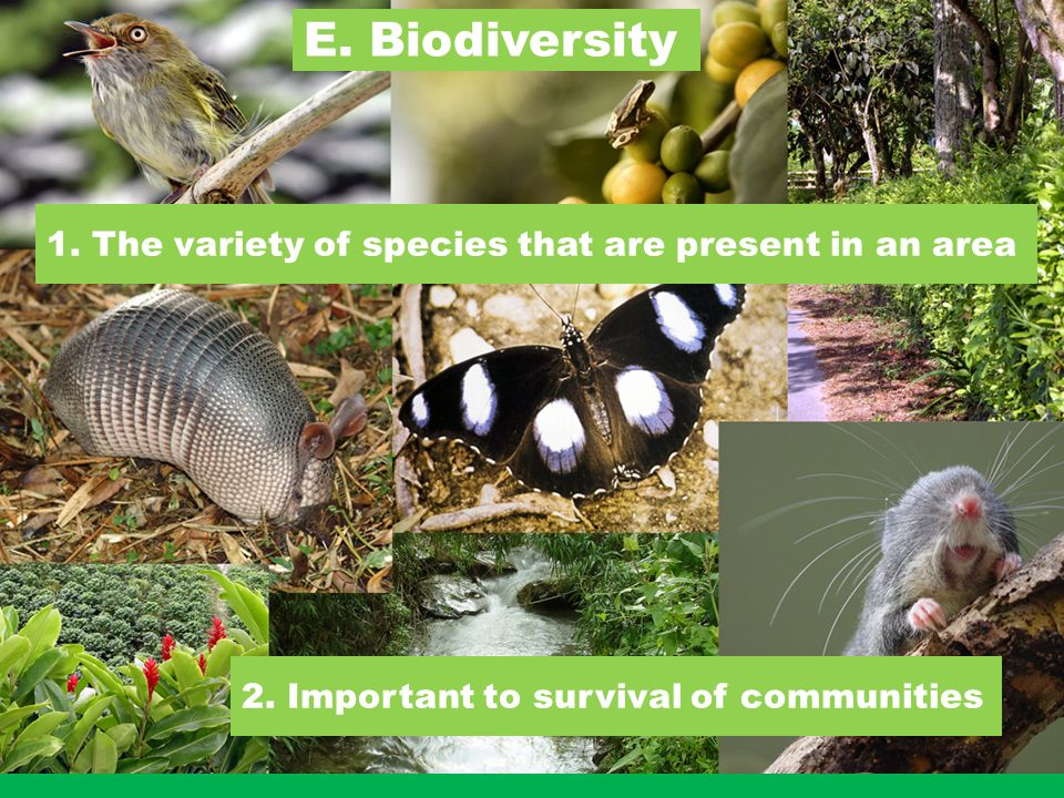 E. Biodiversity 1. The variety of species that are present in an area 2.