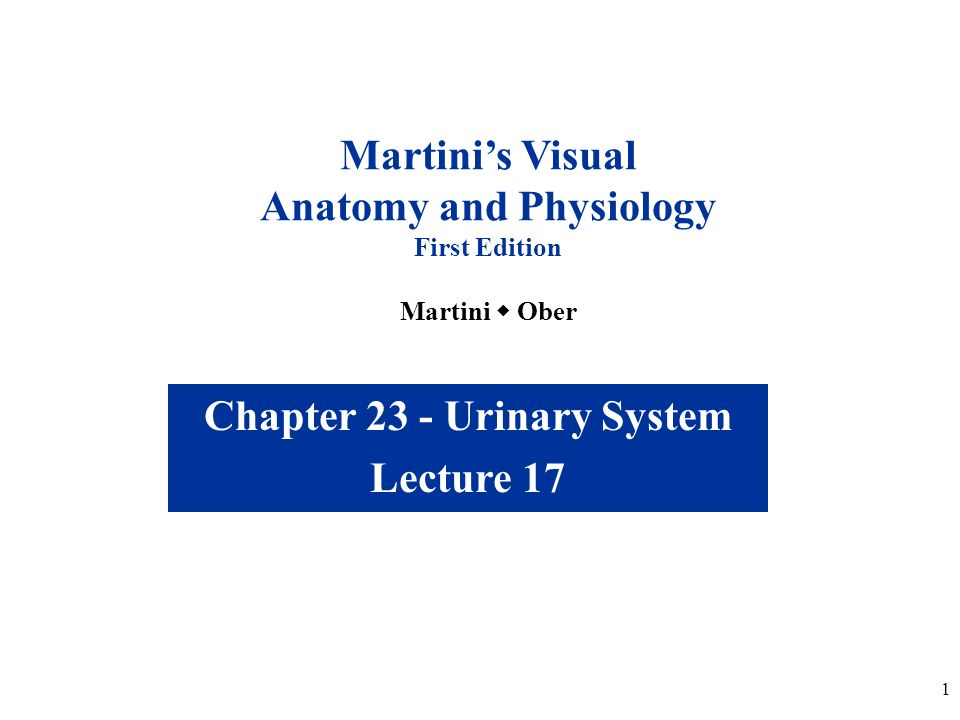 1 Chapter 23 - Urinary System Lecture 17 Martini\'s Visual Anatomy ...