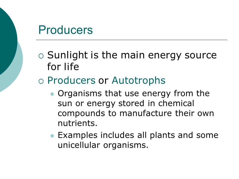 Producers  Sunlight is the main energy source for life  Producers or Autotrophs Organisms that use energy from the sun or energy stored in chemical compounds to manufacture their own nutrients.