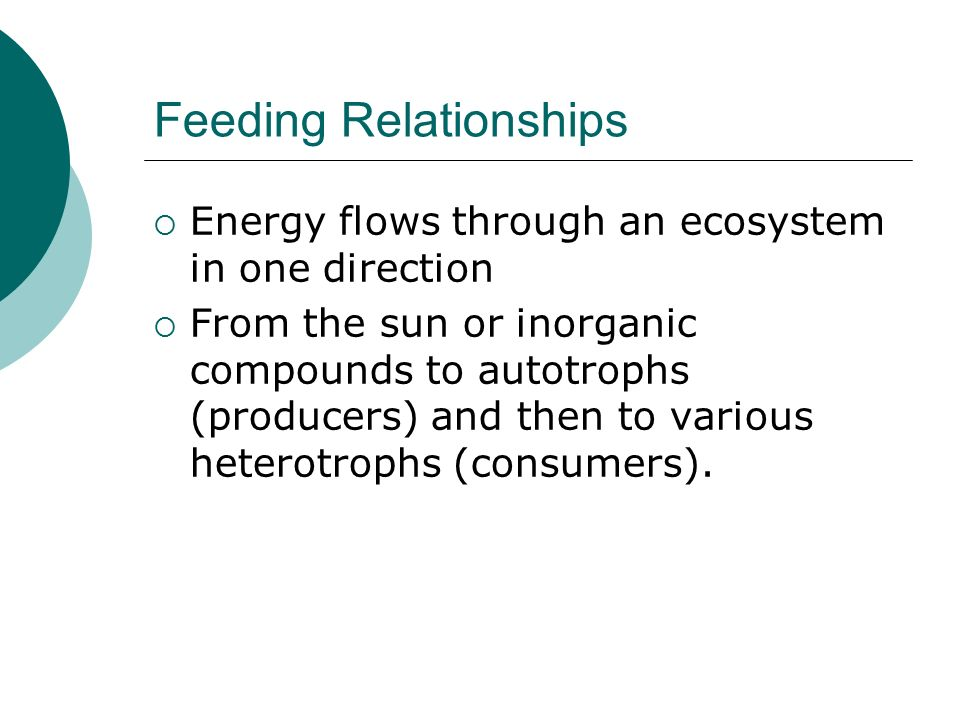 Feeding Relationships  Energy flows through an ecosystem in one direction  From the sun or inorganic compounds to autotrophs (producers) and then to various heterotrophs (consumers).
