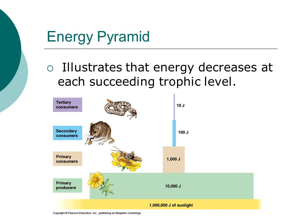 Energy Pyramid  Illustrates that energy decreases at each succeeding trophic level.