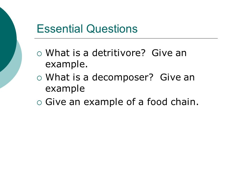 Essential Questions  What is a detritivore. Give an example.