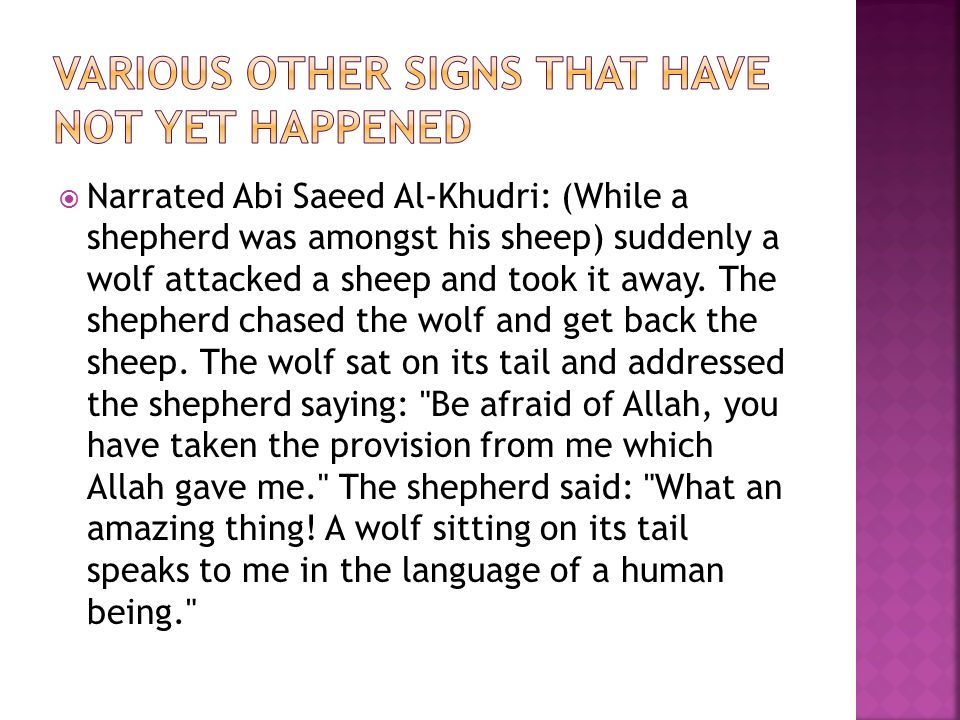  Narrated Abi Saeed Al-Khudri: (While a shepherd was amongst his sheep) suddenly a wolf attacked a sheep and took it away.