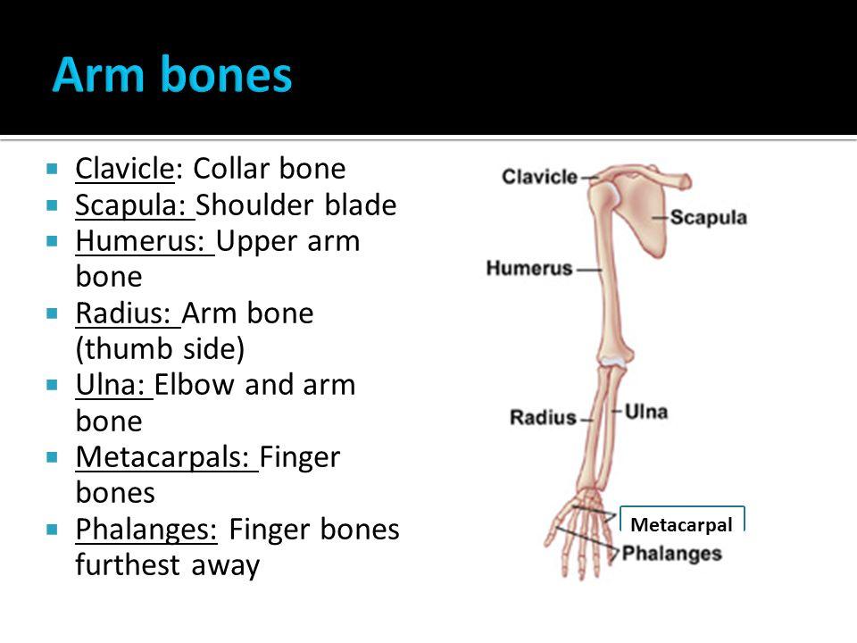 Skeleton The Framework Of Connected Bones In Your Body Bone