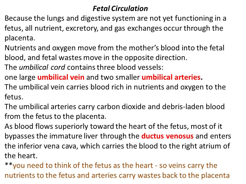 Fetal Circulation Because the lungs and digestive system are not yet functioning in a fetus, all nutrient, excretory, and gas exchanges occur through the placenta.