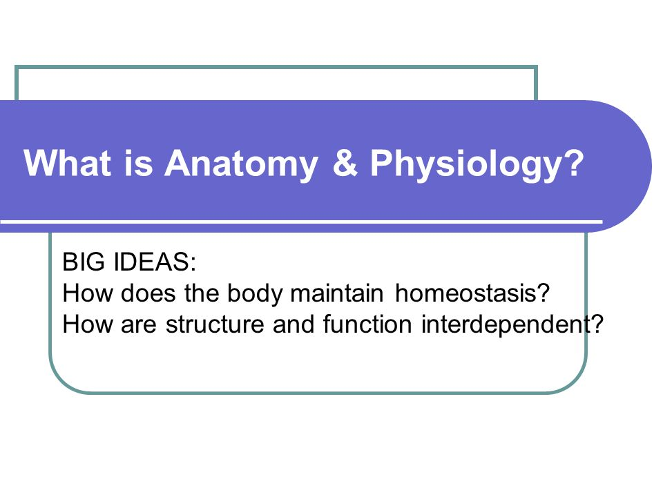What Is Anatomy Physiology Big Ideas How Does The Body Maintain